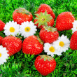 Fresh strawberries on grass and flowers — Stockfoto