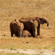 African Elephants in nature - Stock Photo