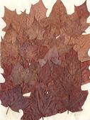 Leaf fall background — Stock Photo