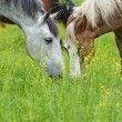 Horse on a green grass — Stock Photo #11062780