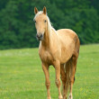 Horse on a green grass — Stock Photo #11062834