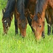 Horse on a green grass — Stock Photo #11062916
