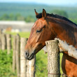 Portrait of Horse — Stock Photo