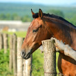 Portrait of Horse — Stock Photo #11067370