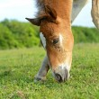 Horse on a green grass — Stockfoto