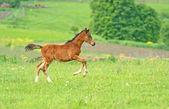 Hurrying Horse — Stock Photo