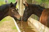 Horse watering for animals — Stock Photo
