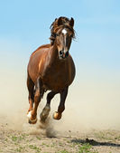 Horse hurrying on a road — Stock Photo