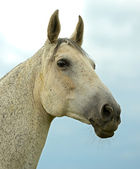 Portrait of Horse on a background sky — Stock Photo