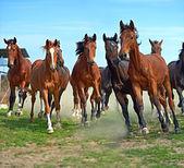 Kůň běžela tryskem — Stock fotografie