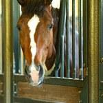 Portrait of Horse — Stock Photo