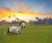 Koně na zelené trávě — Stock fotografie