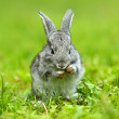 A hare is in a green grass - Stock Photo