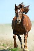 Horse hurrying at a gallop — Stock Photo