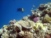Arrecife de coral y peces — Foto de Stock