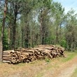 Timber in forest — Stock Photo