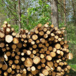 Stock Photo: Wood stack