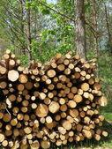 Stack di legno — Foto Stock