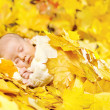Autumn newborn baby sleeping in maple leaves. Close up portrait. — Stock Photo