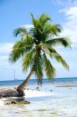 加勒比海滩与棕榈和白色的沙滩 — 图库照片