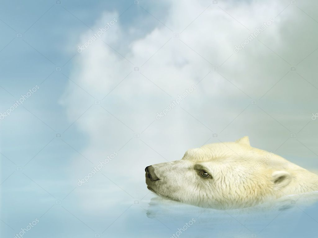 Illustration of a polar bear swimming in the ocean  Stock Photo #10823467