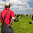 Typical Dutch landscape with farmer and cows — Stock Photo #10817701