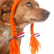 Funny Dutch dog looking op — Stock Photo