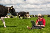 Jonge landbouwer met laptop in veld met koeien — Stockfoto
