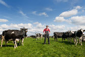 Farmer in field with cows — Stock Photo