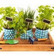 Kitchen herbs on tray — Stock Photo