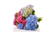 Bouquet pink and blue Hydrangea — Photo
