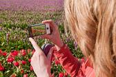 Ta bilder i holland — Stockfoto