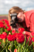 Dutch blond girl with old photo camera in field with tulips — Stock Photo