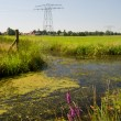 Dutch landscape in Friesland — Stock Photo