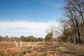 Wilde natuur met gebroken tree — Stockfoto