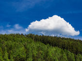 Thüringer woud — Stockfoto