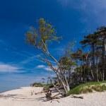 Baltic Sea coast — Stock Photo