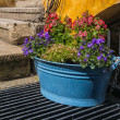 Foto Stock: Flower pot