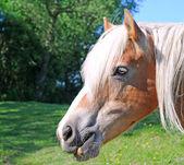 Horse's head — Stock Photo