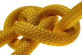 Yellow dagger knot closeup. — Stock Photo