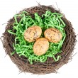 Nest — Stock Photo #10752309