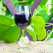 Stock Photo: Glass with red wine in vineyard.