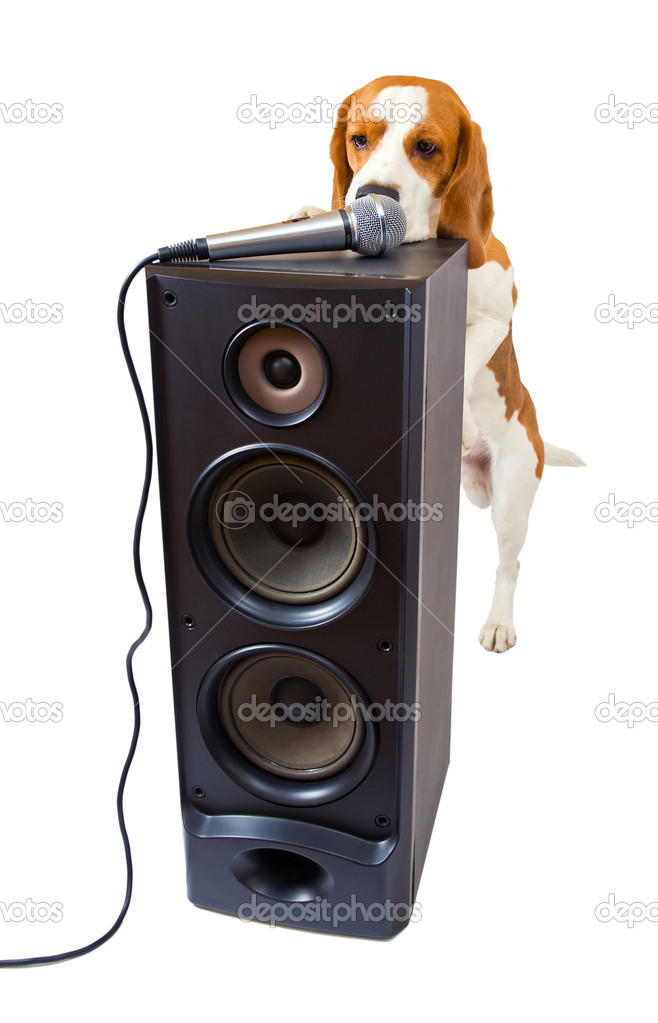 Singing dog on a white background.  Stock Photo #10947387
