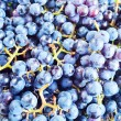 Grapes for wine manufacturing. — Stock Photo