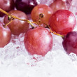 Red grape — Stock Photo #12401626
