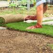 Ogrodnictwo - układanie sod na nowy trawnik — Zdjęcie stockowe