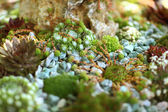 Detail of rock garden — Stock Photo