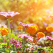 Abstract flowerbed in sunny day - Stock Photo