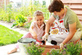 Child helps by replanting — Stock Photo