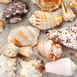 Seashells background - Photo